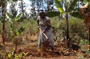 maize-farmer
