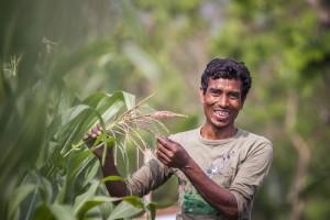 Maize Horinofolia Bangladesh