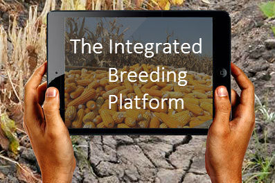 The Integrated Breeding Platform