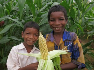Maize Mayurbhanj