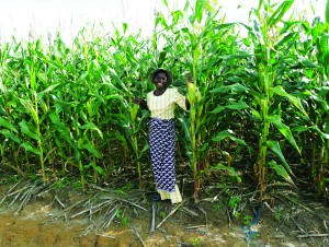 """Grace Malaitcha, from Zidyana, Malawi is considered a """"farmer leader"""" because of her use of conservation agriculture. Photo credit: Patrick Wall/CIMMYT."""