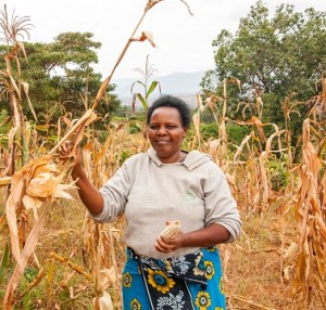 Sarah's success with KDV4 drought-tolerant maize has paid off, and she's harvested more despite the drought than she normally does even in good years. Photographer: CIMMYT/Brenda Wawa