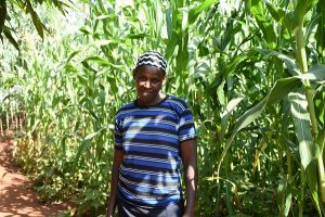 """I learned about intercropping from an extension agent and decided to try it out on a small plot, before planting in the larger plot,"" Hellen Owino shares, adding, ""I think I'm now ready to plant on the larger piece of land. Even though some Striga plants emerge, I'm able to weed them out before they flower, and my yield is not severely affected."" Photo: K. Kaimenyi/CIMMYT"